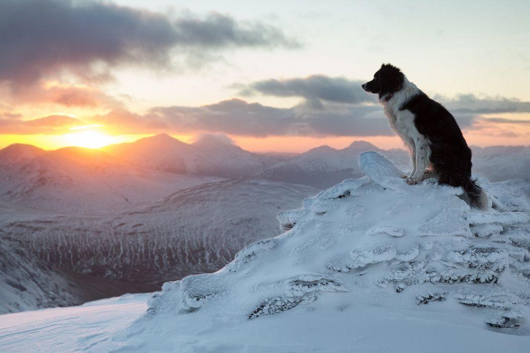 Border Collie dog mood mountains winter snow wallpaper