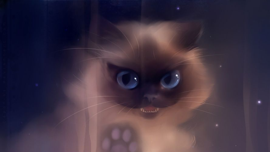 cat baby kitten artwork art wallpaper