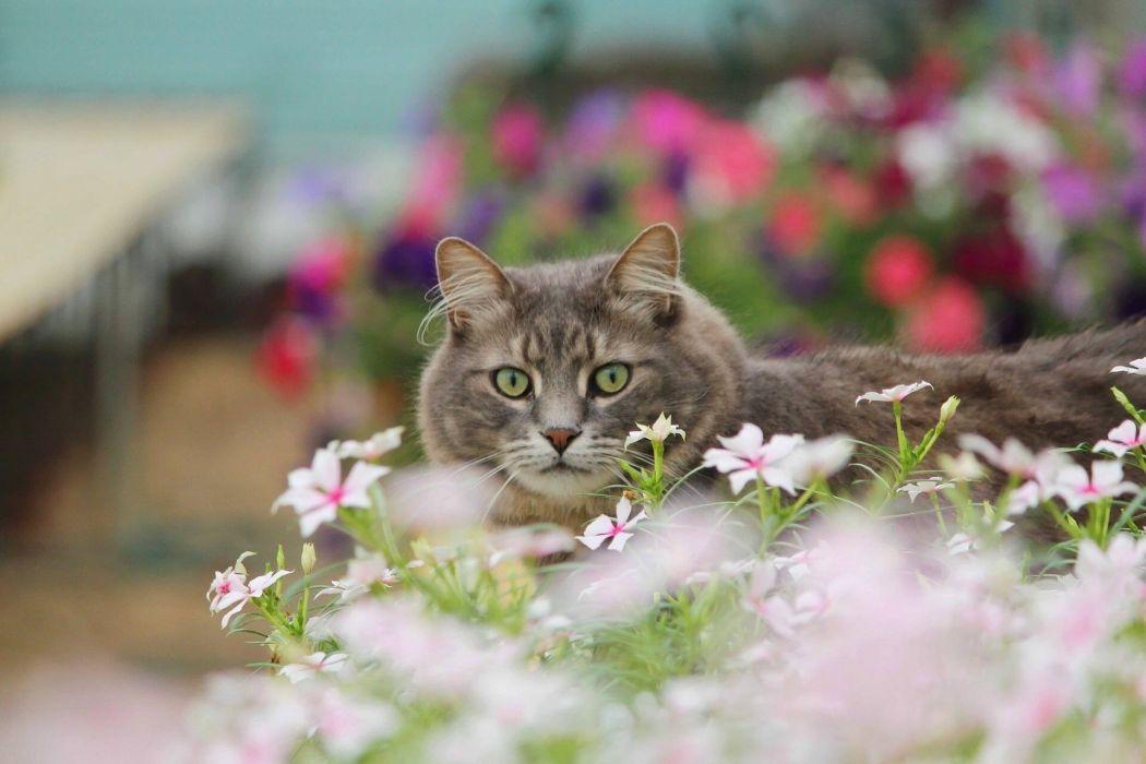 cat flower eyes wallpaper