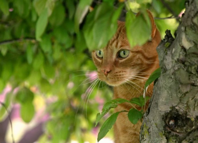 cat red face tree leaves eyes eye wallpaper