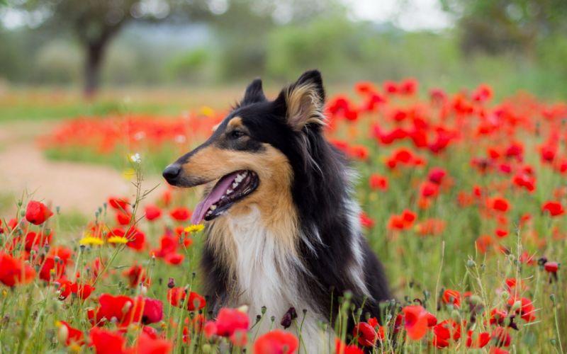 dog flowers flower spring meadow wallpaper