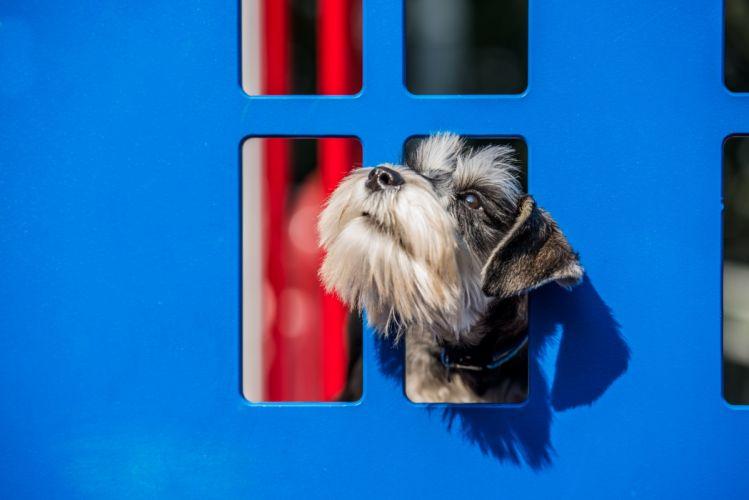 dog blue fence wallpaper
