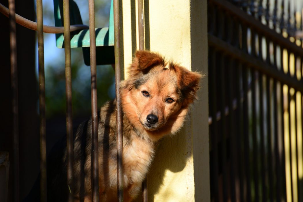 dog friend fence wallpaper