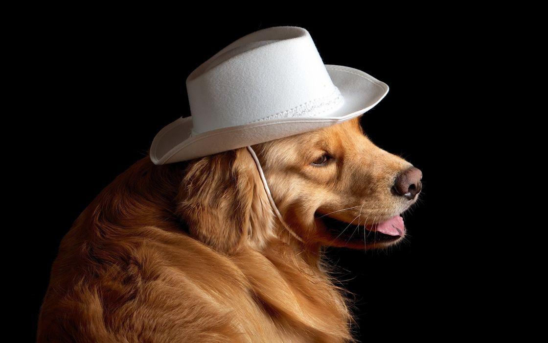 dog hat friend wallpaper