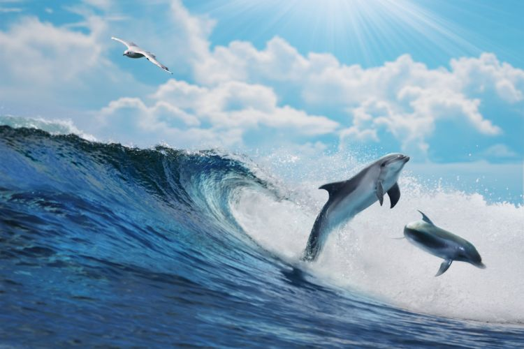Dolphin ocean sea wave wallpaper