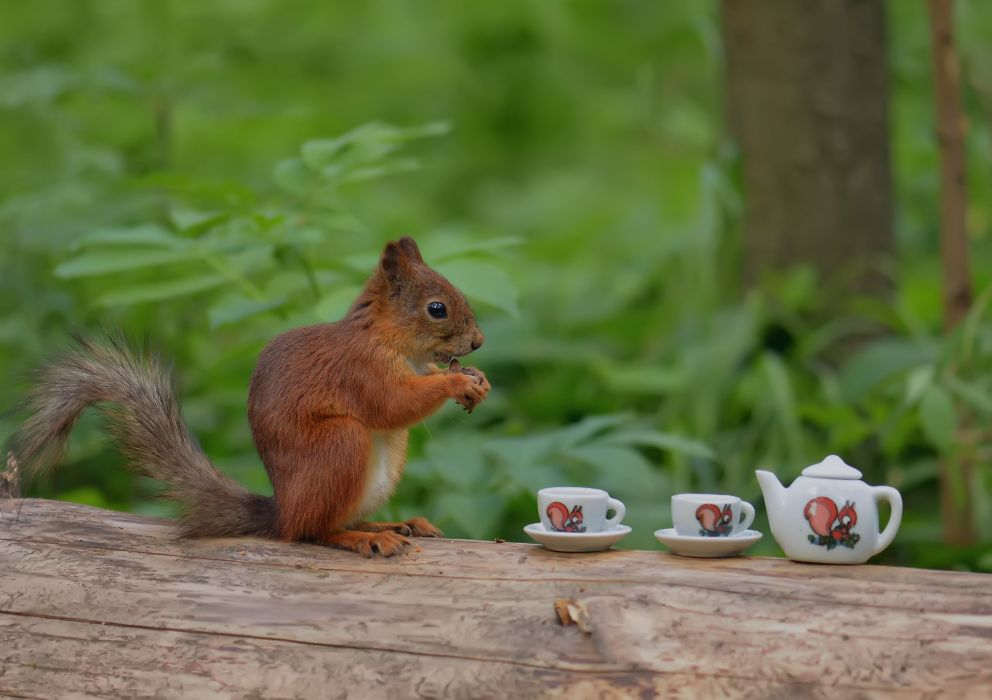 forest tree trunk squirrel cup tea funny wallpaper