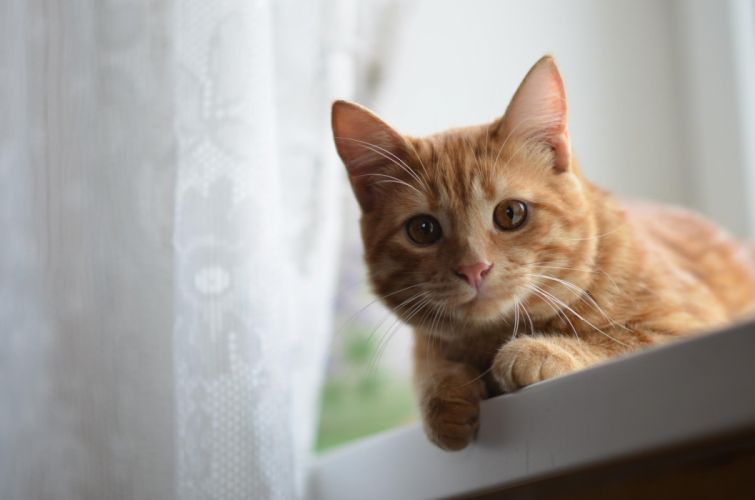 fur whiskers eyes animals cat wallpaper