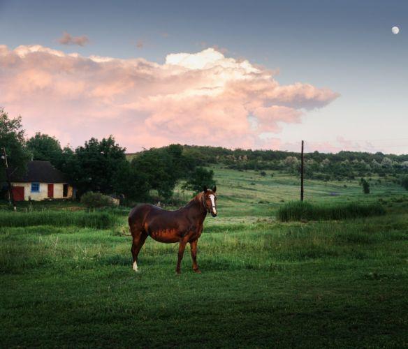 horse meadow wallpaper