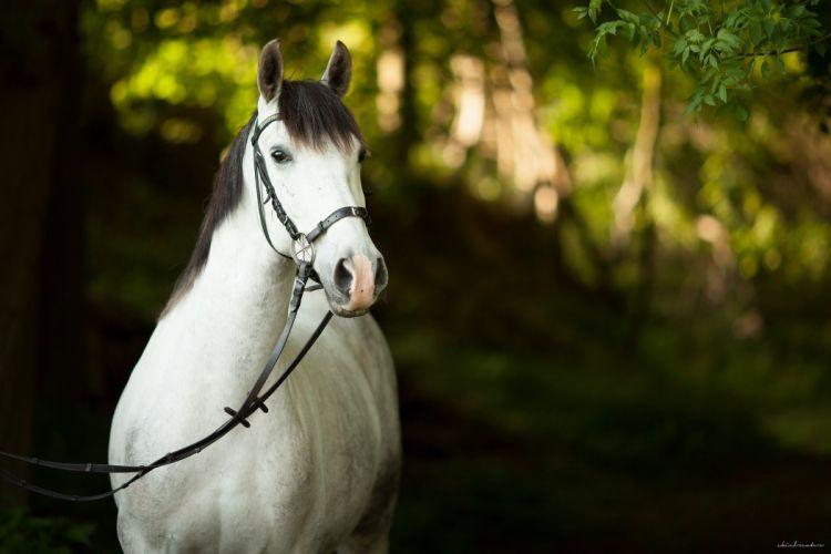 horse horses f wallpaper