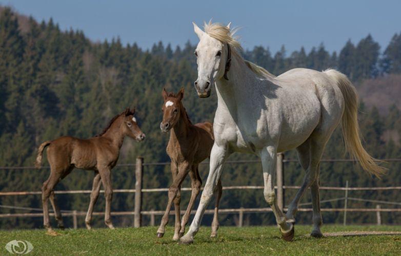 horse horses colt baby mother wallpaper