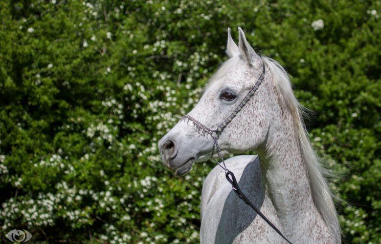 horse horses gf wallpaper