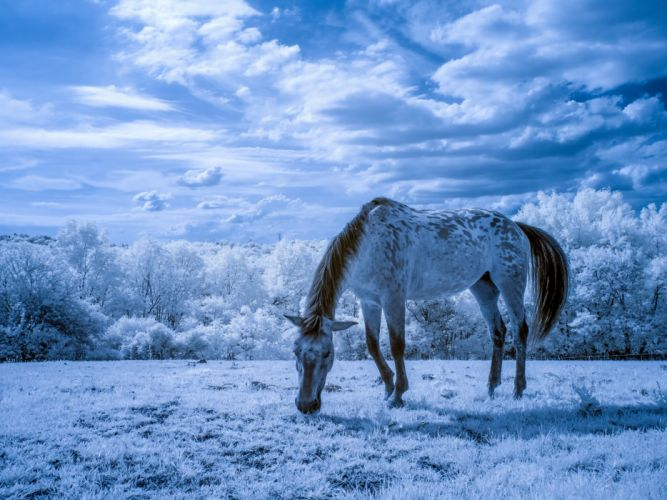 horse meadow trees wallpaper