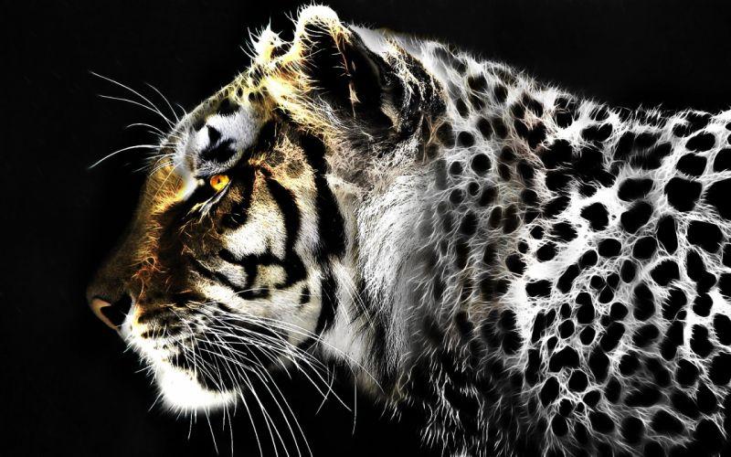 jaguar leopard fractal artwork wallpaper