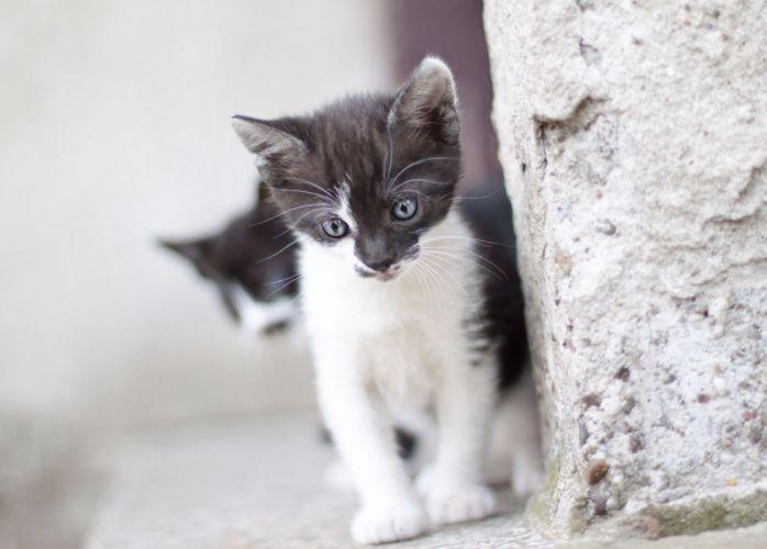 kitten baby cat wallpaper