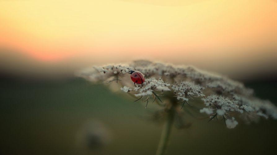 Ladybug flower d wallpaper