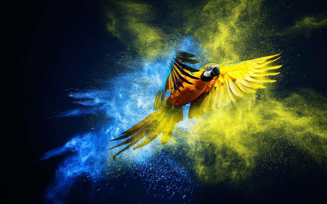 Macaw parrot artwork wallpaper