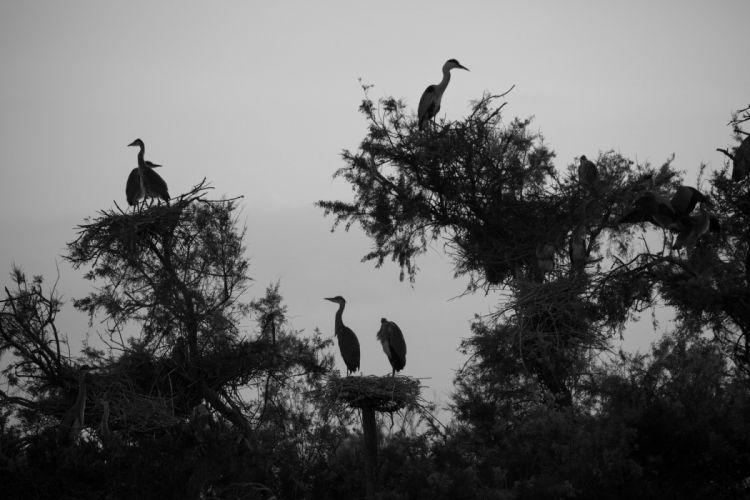 monochrome trees shrubs nests stork wallpaper