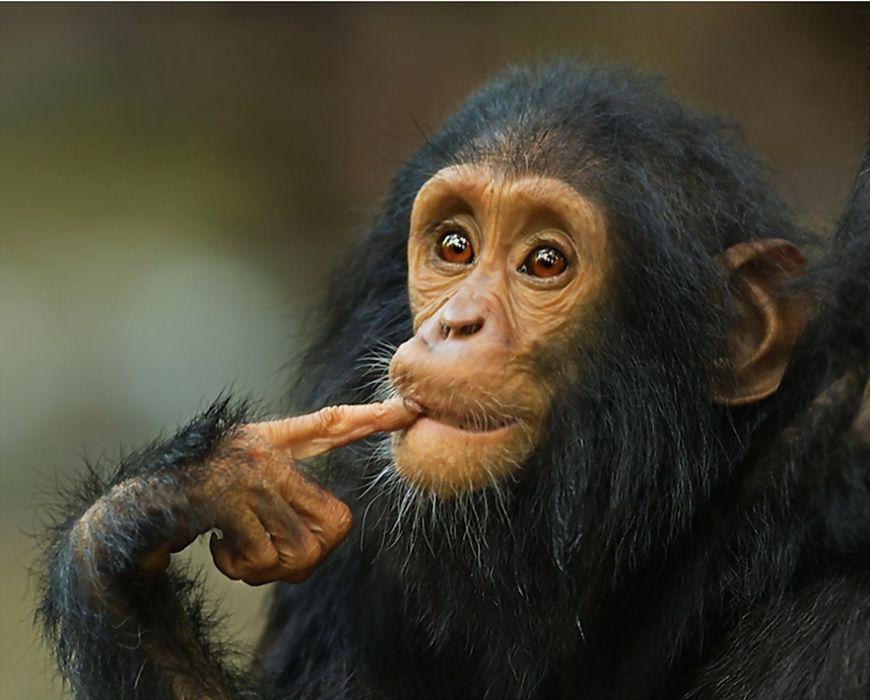 monkey baby wallpaper