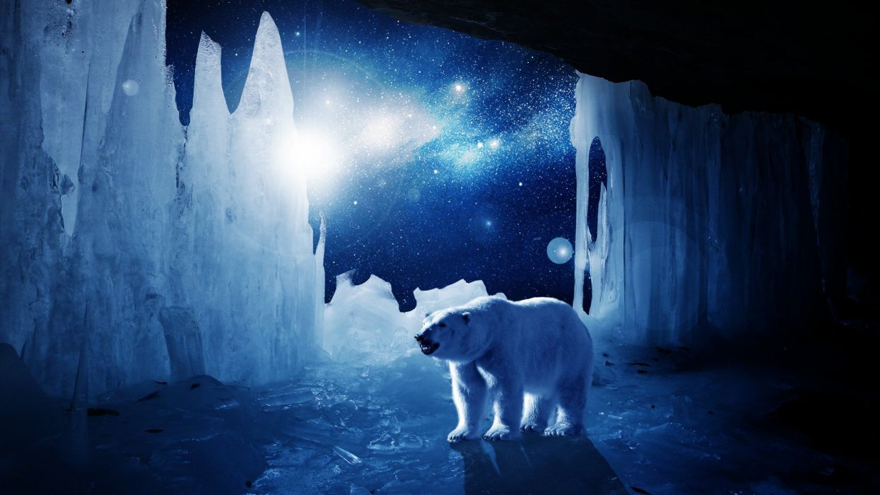 polar bear ice winter stars blue artwork wallpaper