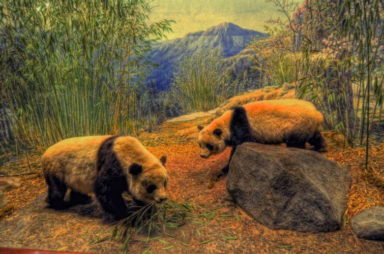 panda bamboo wood wallpaper