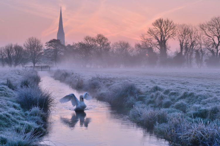 Salisbury England Salisbury England river river swan bird morning dawn fog frost wallpaper