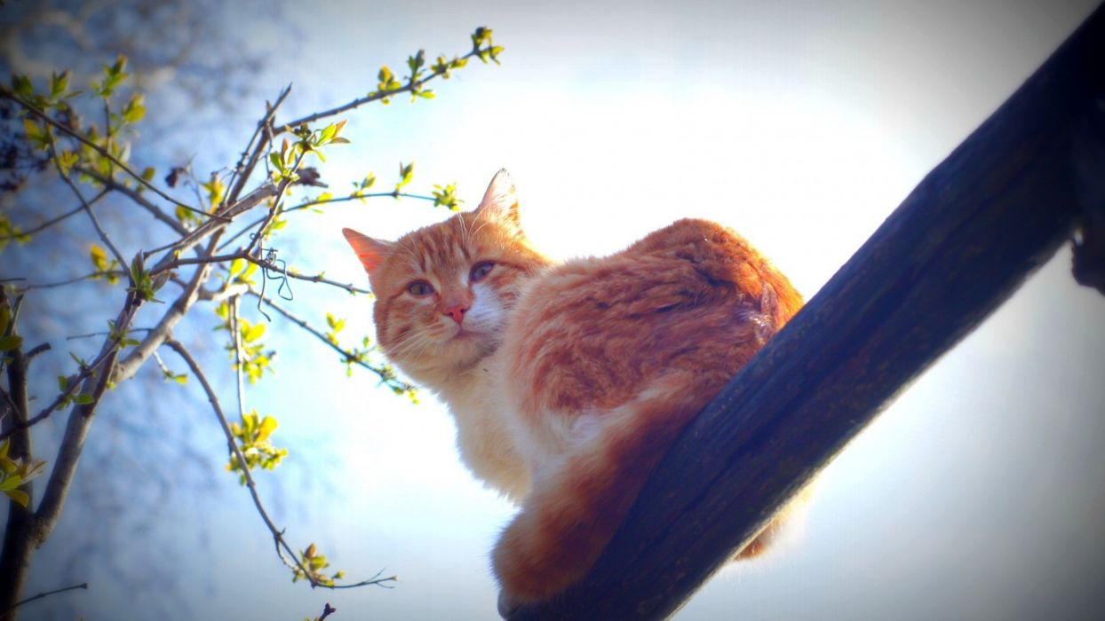 spring cat animals nature morning sun whiskers wallpaper