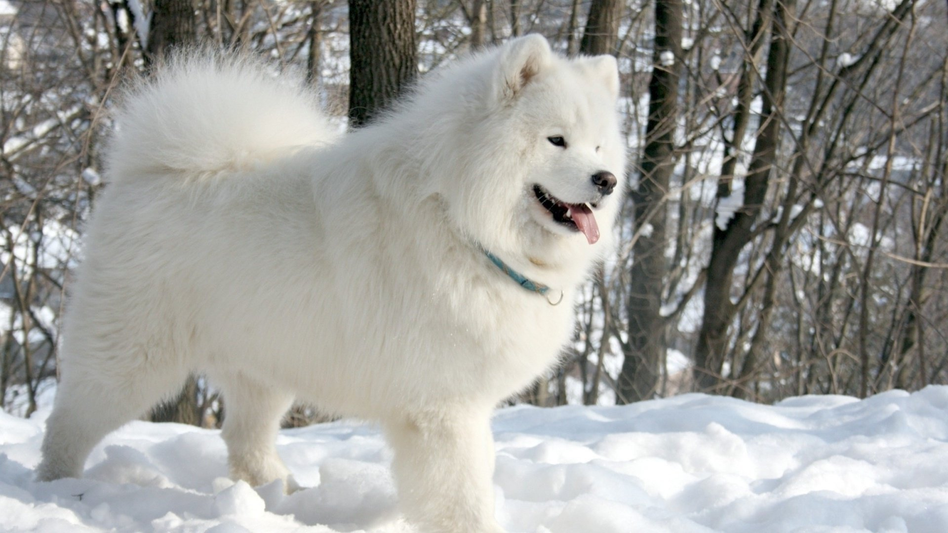 Small Dog Winter