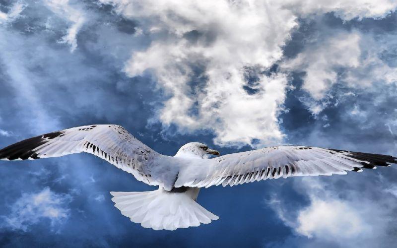 ALBATROSS seabird bird birds wallpaper