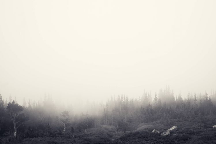 Foggy Forest - Jake Stewart wallpaper