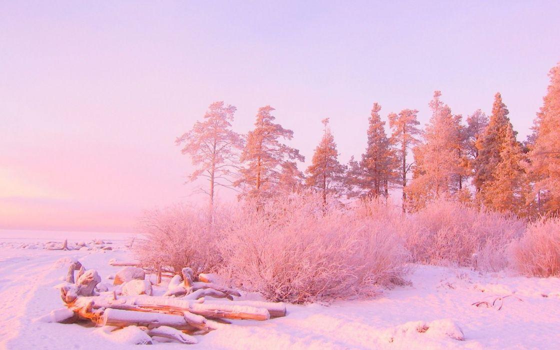 invierno naturaleza nieve rosa wallpaper