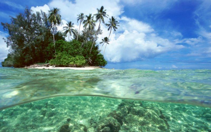isla palmeras oceano wallpaper