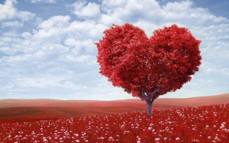 arbol corazon rojo wallpaper