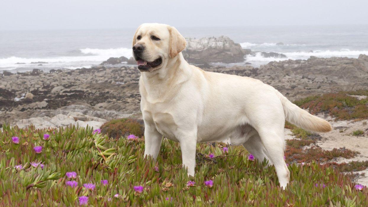 perro cazador wallpaper