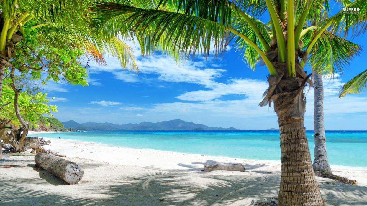 playa tropical palmeras wallpaper