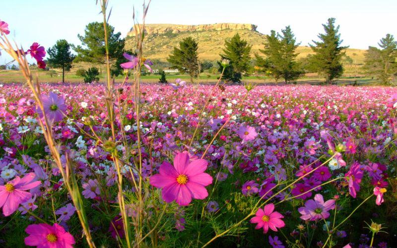 flores pradera naturaleza wallpaper