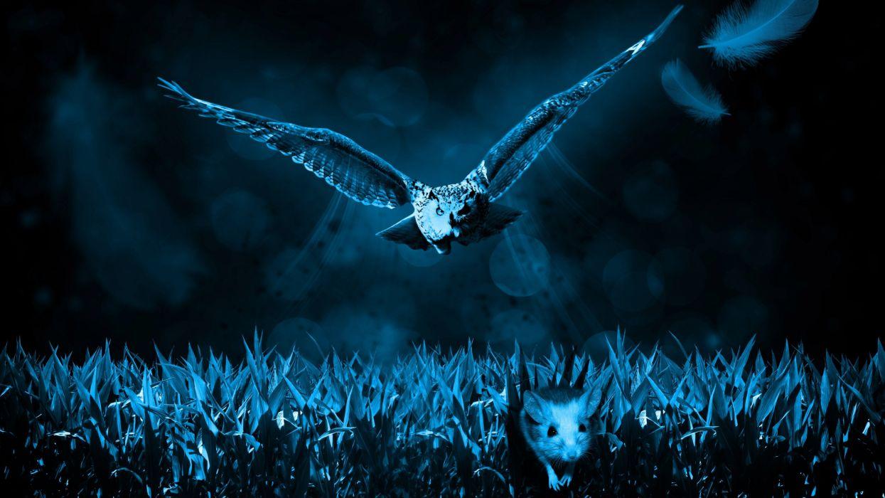 Hunter Owl Predator Mouse wallpaper
