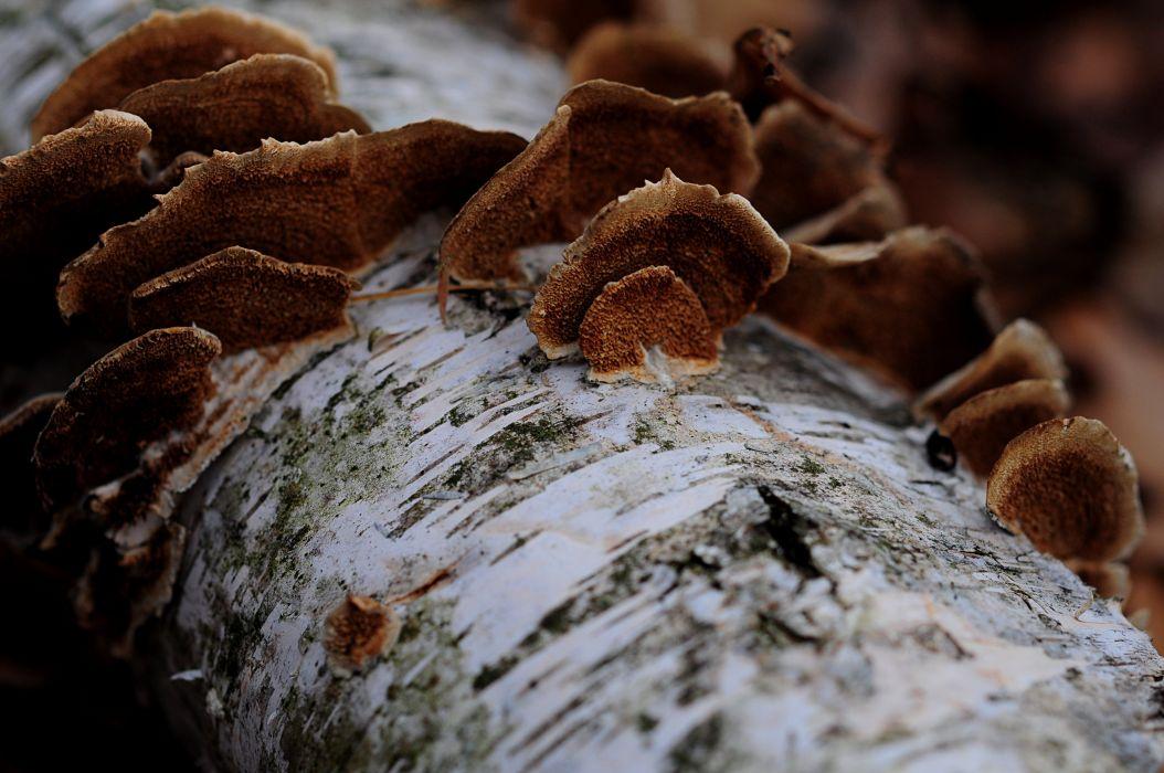 natural tree fungus wallpaper