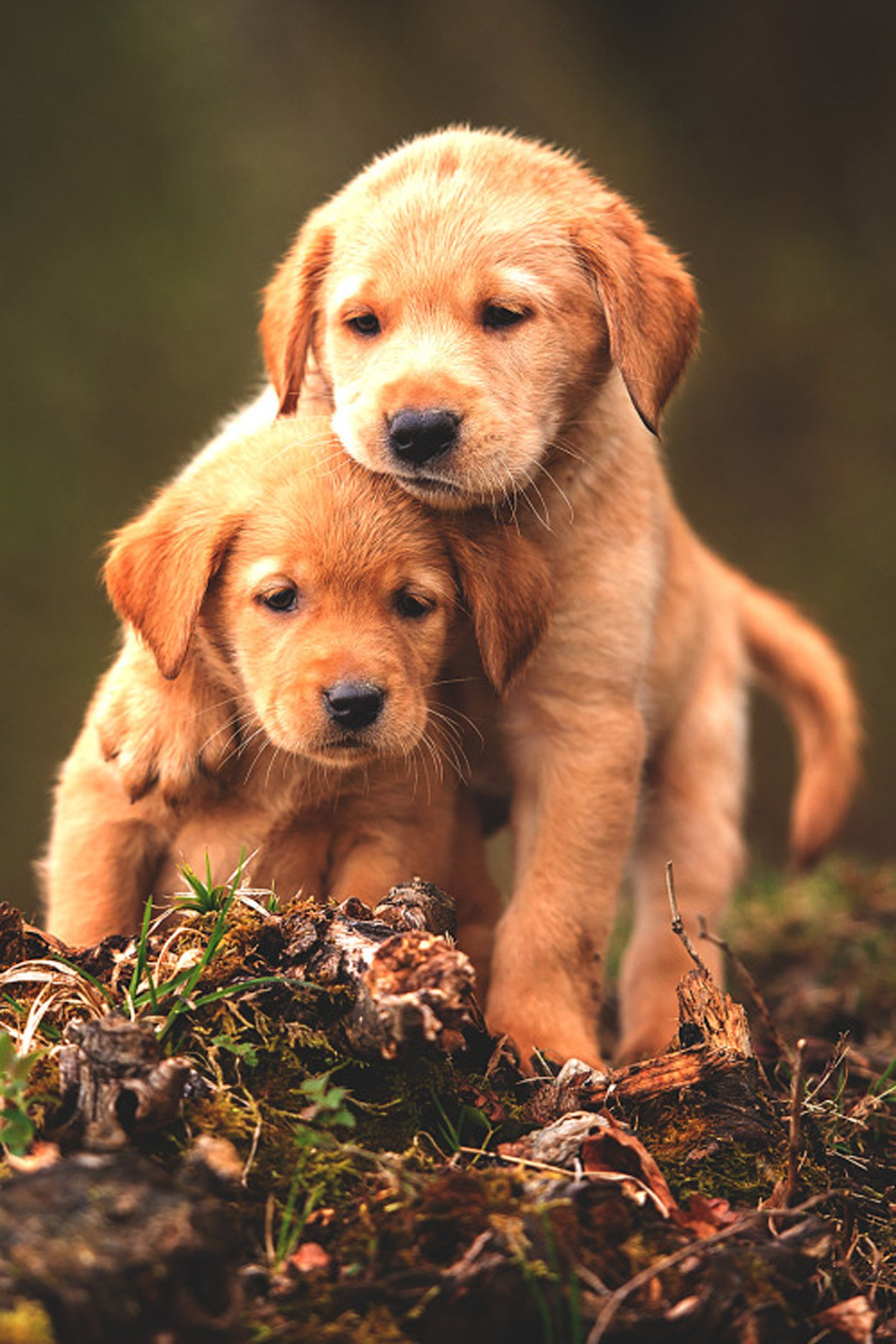 Cute Baby Animal Dogs Wallpaper