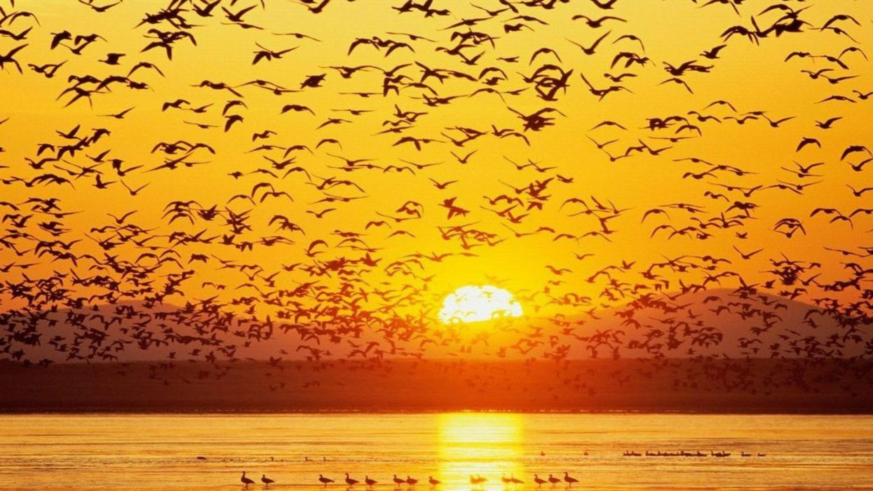 amanecer aves patos sol wallpaper
