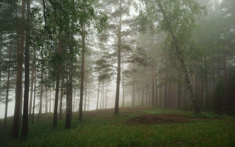 forest nature tree landscape fog mist wallpaper