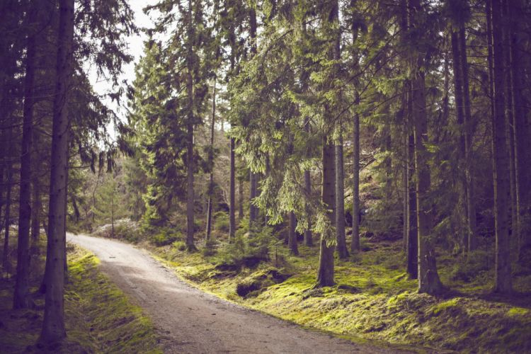 forest nature tree landscape road path wallpaper
