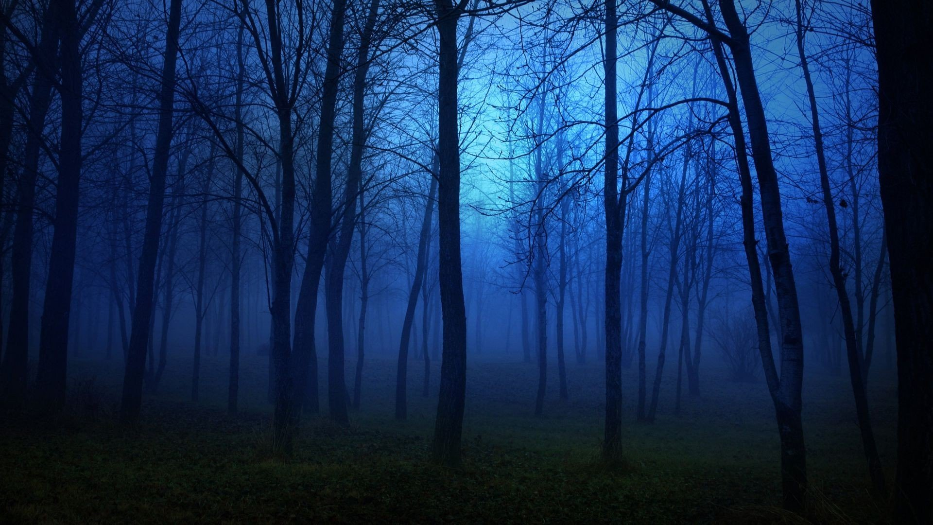 Forest Nature Tree Landscape Night Fog Mist Dark Spooky
