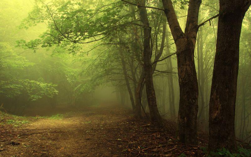 forest nature tree landscape fog wallpaper