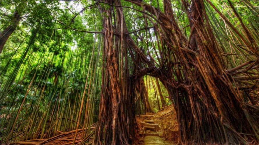 forest nature tree landscape bamboo wallpaper