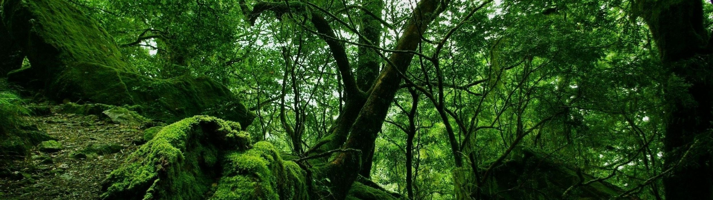 forest nature tree landscape wallpaper