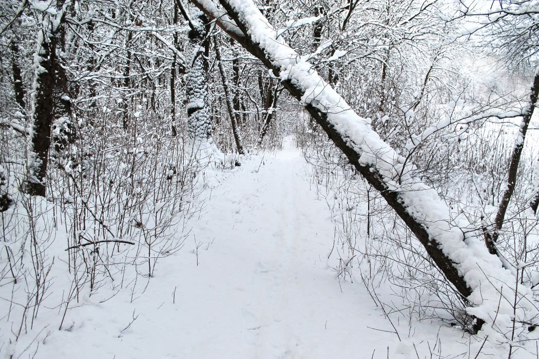 winter forest trees snow path wallpaper