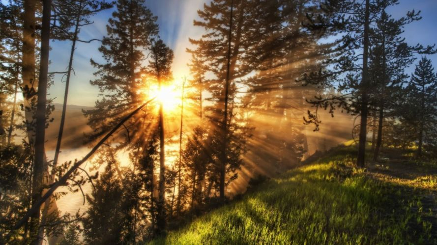 bosque rayos sol naturaleza paisaje wallpaper