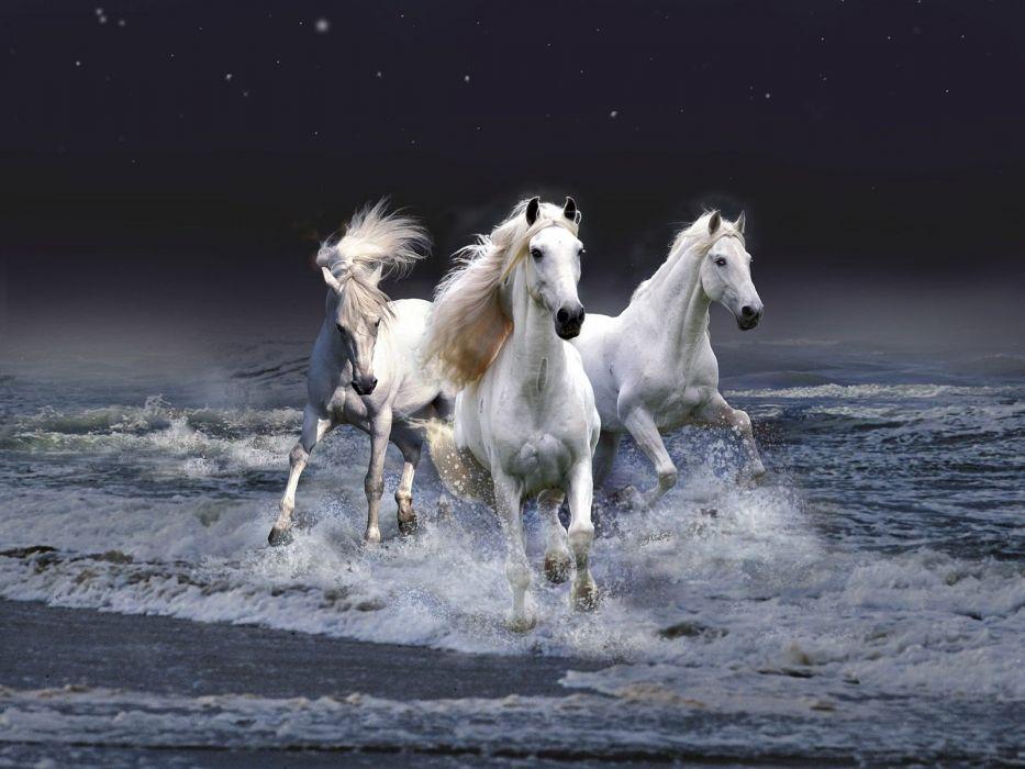 cute animal beauty horse beautiful sea wallpaper