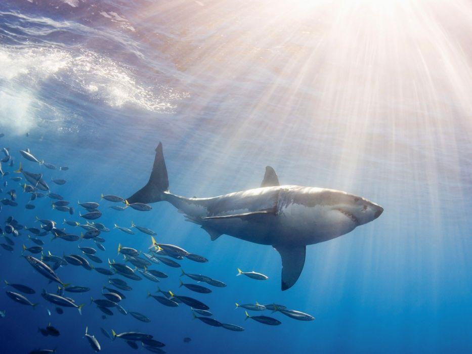 cute animal beauty ocean fish beautiful wallpaper
