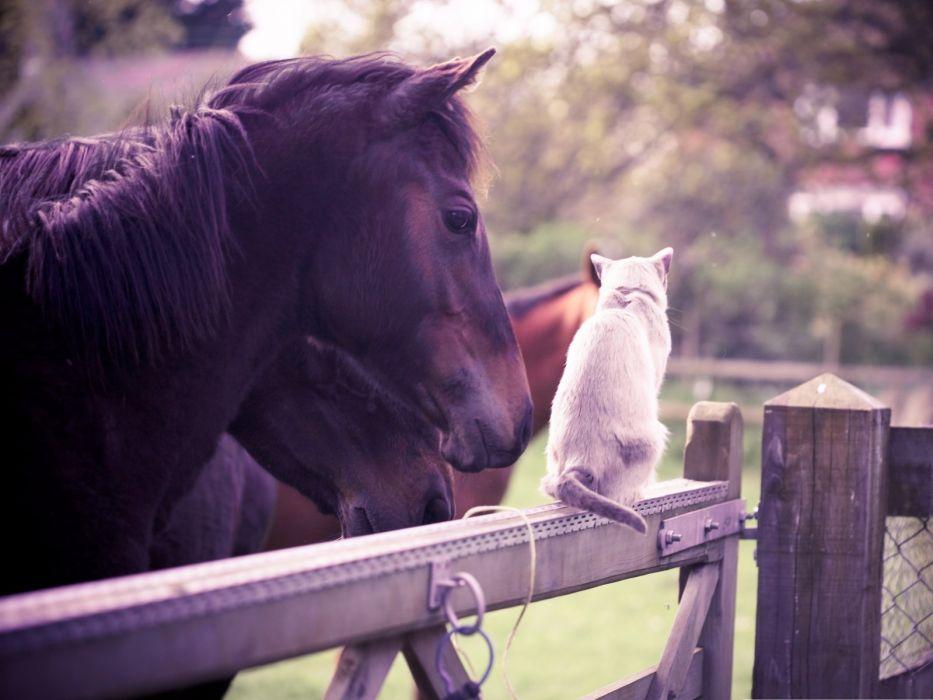 cute animal beauty cat horse wallpaper